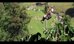 Canopy by Zip Line